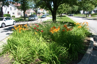 Arlington pocket garden 1