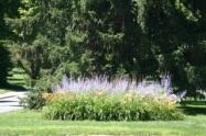 Westover pocket garden 1